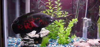 A Casino Database Gets Hacked Through a Smart Fish Tank Thermometer